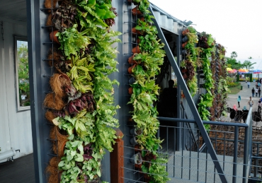 Why Your Next Garden Should Be a Vertical One